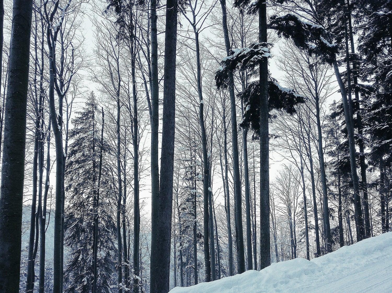 What I Love About Winter Kalte Schönheit Seven Stories
