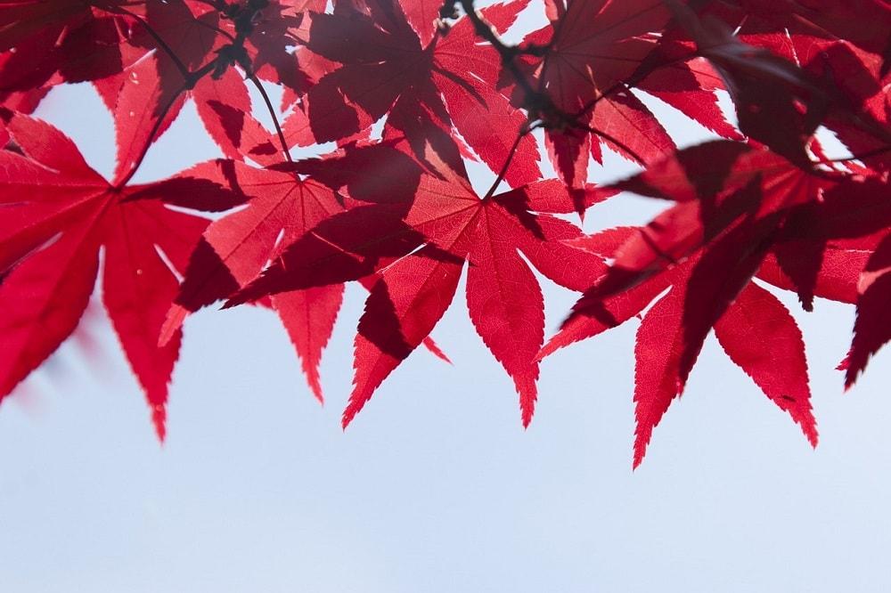 7 Tage 7 Stories   Wenn die Blätter fallen