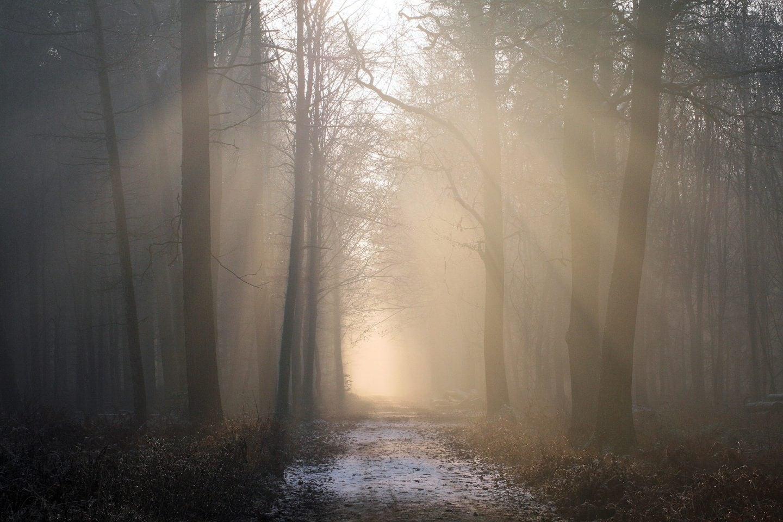 7 Tage 7 Stories   Waldspaziergang und Musik